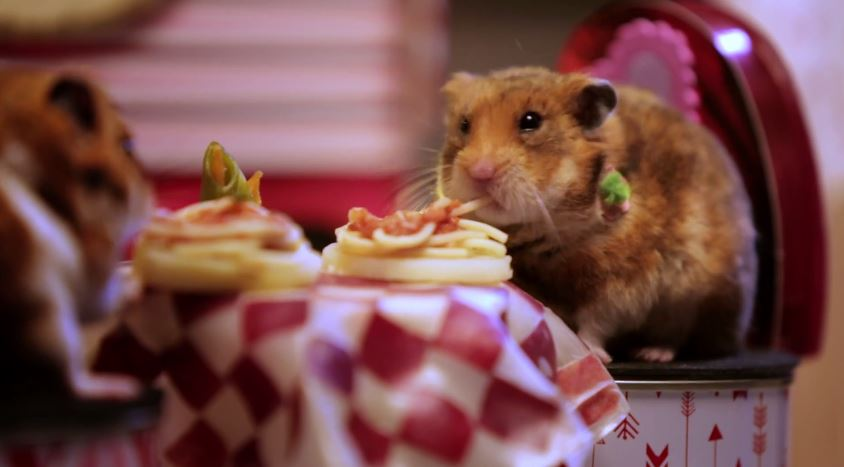 funny hamsters   olive s animals