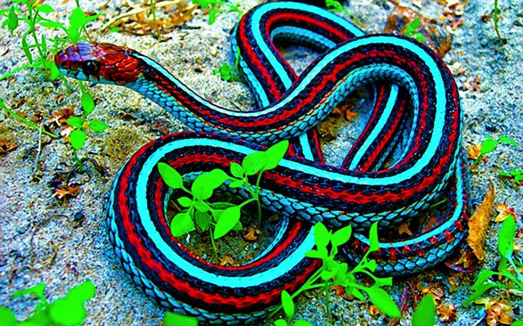 Colorful snakes - Olive's Animals